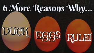 Download 1/2 Doz More Eggcellent Reasons to Eat Duck Eggs Video