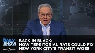 Download Back in Black: How Territorial Rats Could Fix New York City's Transit Woes - The Daily Show Video
