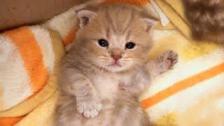 Download EP45 - 춤추는 고양이 Dancing Cat [Suri&Noel cat story] Video