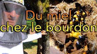 Download Les gourdes de miel du bourdon Video