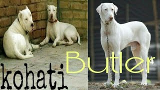 Download Kohat bulter dogs market with price Video