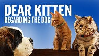 Download Dear Kitten: Regarding The Dog Video