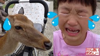 Download 奈良公園でシカにエサやり Deer Feeding Nara Park Video