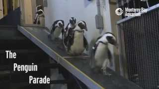 Download It's a Penguin Parade! Video