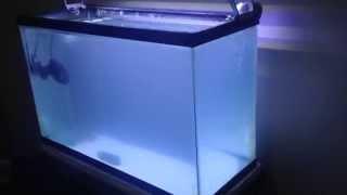 Download Como hacer una pecera marina desde cero. Día 1 Video
