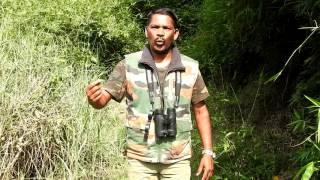 Download bird watching in coorg Video