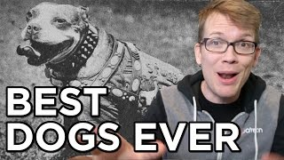 Download Top 10 Best Dogs Ever Video