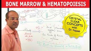 Download Bone Marrow & Hematopoiesis - Blood Cells Formation Video