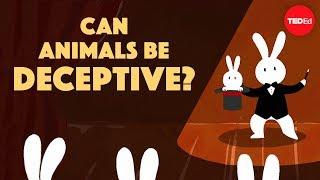 Download Can animals be deceptive? - Eldridge Adams Video