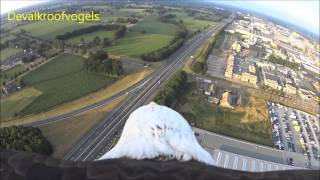 Download Eagle flight from balloon Video