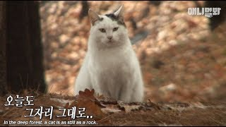 Download ″No animal ever thinks that its owner abandoned it..″ Video