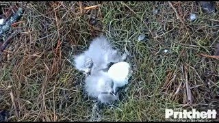 Download SW FL Eagles 1.28.16 1050am feeding E7 and E8 trys to get a bite Video