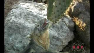Download Galápagos Islands (UNESCO/NHK) Video