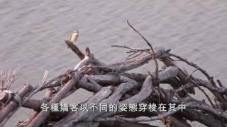 Download 社子島QRcode影片 蜻蜓篇 Video
