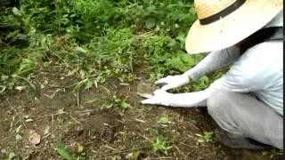 Download 可愛い訪問者 ~野ウサギの仔~ Video