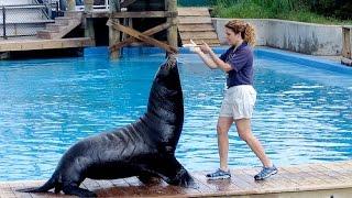 Download Funny Smart Cute Sea Lion Show Video