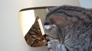 Download 처음으로 골드버튼을 본 고양이들의 반응 Video
