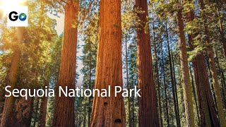 Download Unknown Sequoia National Park Video