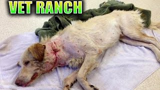 Download Dog Saved 1 HOUR before being Euthanized *GRAPHIC* Video