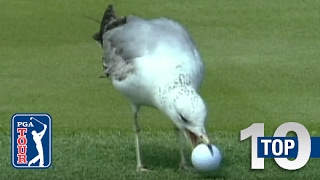 Download Top 10: Animal Encounters on the PGA TOUR Video