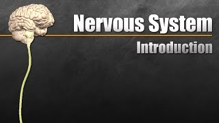 Download The Nervous System In 9 Minutes Video