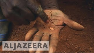 Download Ivory Coast: Farmers abandon cacao for gold mining Video