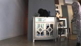 Download Cat Entertainment Video
