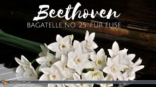 Download Beethoven - Für Elise | Classical Piano Music Video