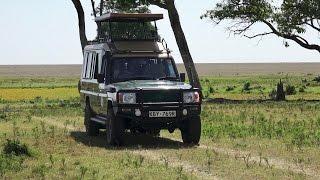 Download A Day on Safari in the Masai Mara Video