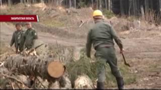Download Вырубка лесов наращивает обороты Video