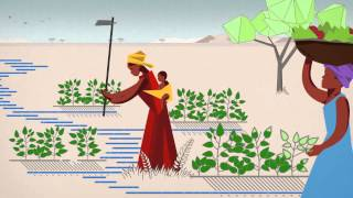 Download Food Security Video