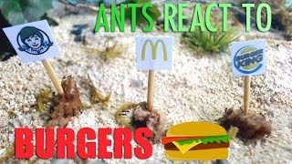 Download Ants React to BURGERS: Wendy's vs McDonalds vs Burger King Video