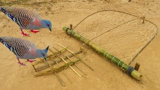 Download Easy Bird Trap - Simple DIY Creative Bird Trap make from Net That Work 100% By Men Video