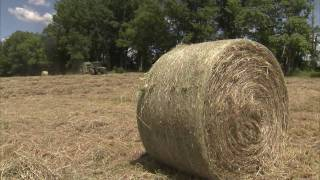Download Growing Hay for the Cattle - America's Heartland Video