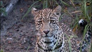 Download Pt 1 Safari Live's Sunset Safari Drive at 3:30 PM on April 19, 2018 |( Hosana & Xidulu ) Video
