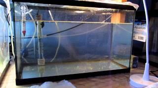 Download Raising Clownfish Past Metamorphosis Day 1 Video