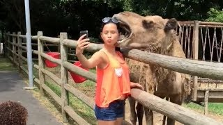 Download CAMELS / FERRETS / WHALES - You have NO IDEA HOW FUNNY they are! Video