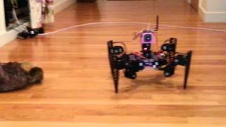 Download Onyx6 Quadruped Robot Walking with Camera 2013 11 10 Video