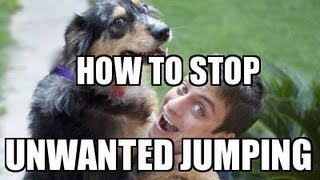Download How to Train your DOG NOT to JUMP Video