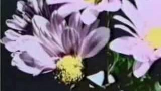 Download PSYCHIC TV - I.C. Water Video