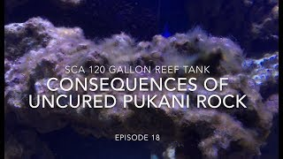 Download SCA 120 Gallon Reef   Ep.18   Consequences of Uncured Pukani Rock Video