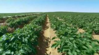 Download Potatoes from Egypt Video