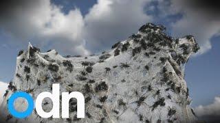 Download It's raining spiders! Spider rain phenomenon explained Video
