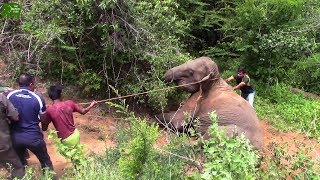 Download Kind Humans helping an Elephant to get up. Humans are Awesome Video