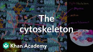 Download The cytoskeleton | Structure of a cell | Biology | Khan Academy Video