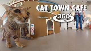 Download Cat Town Cafe (360° 4K VR) Video