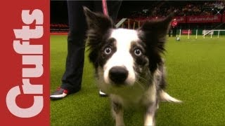 Download Funniest Moments of Crufts 2012 Video