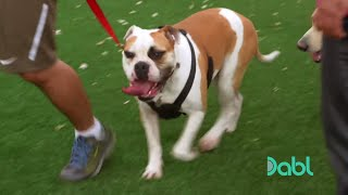 Download Cesar Millan Stops a Dog Fight Video