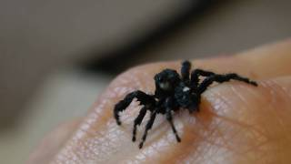 Download Wet Spider Drying Himself Like a Dog or Cat Does. Video