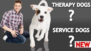 Download What's The Difference Between a Service Dog, Therapy Dog, and an Emotional Support Dog? Video